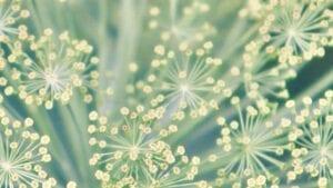 25 jaar MPS: het verhaal van duurzaamheid in de tuinbouwsector
